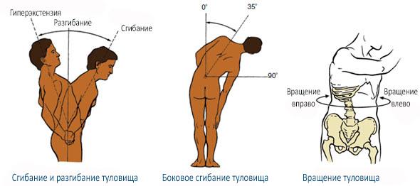 Функции мышц кора