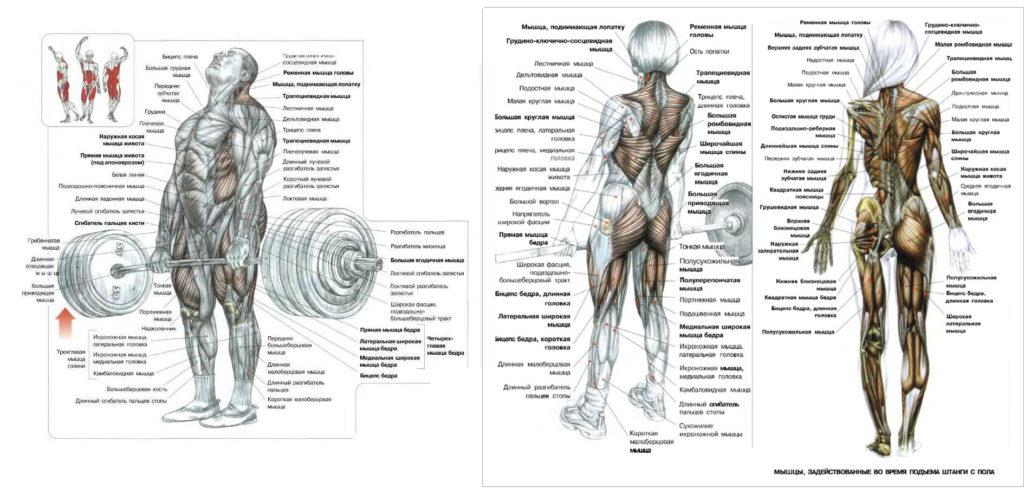 Становая тяга какие мышцы качает